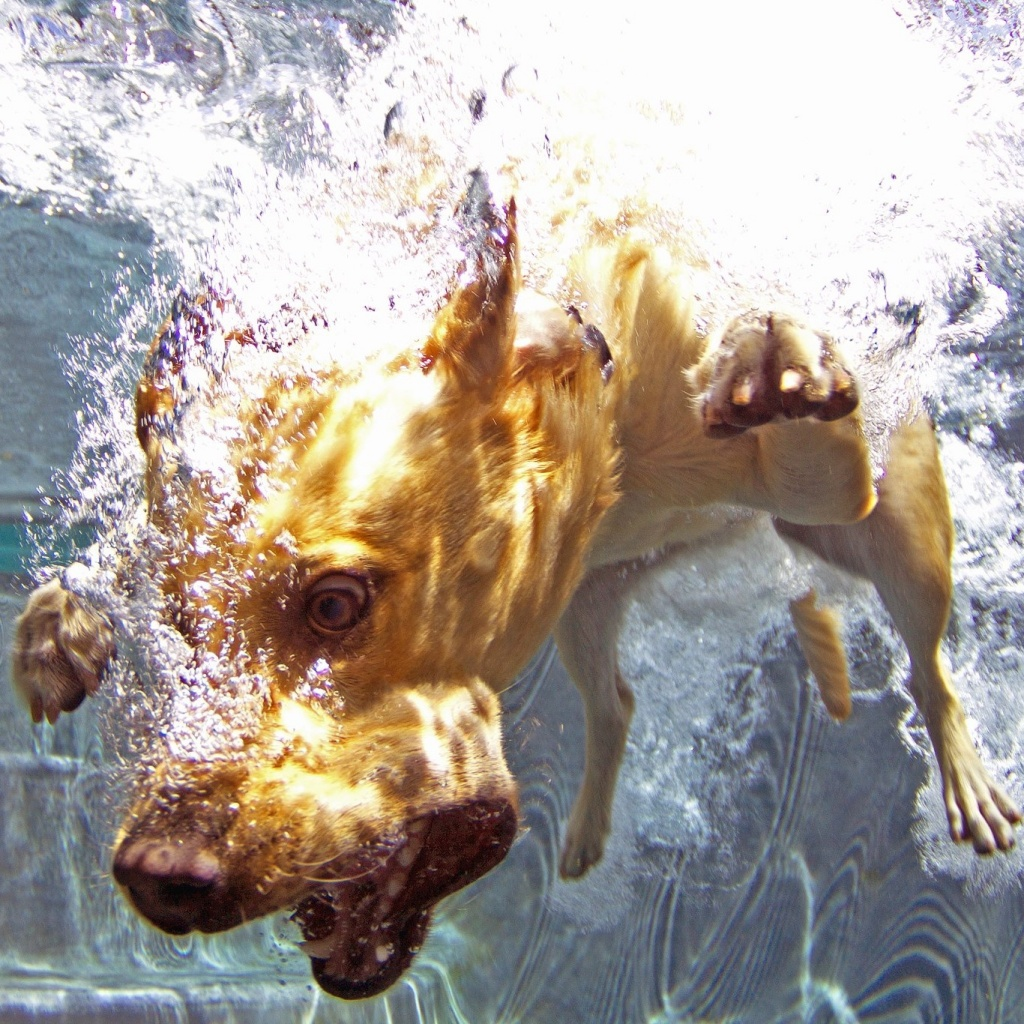 Bardot, The Diving Dog