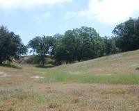 Meadow 2