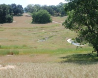 Meadow 3